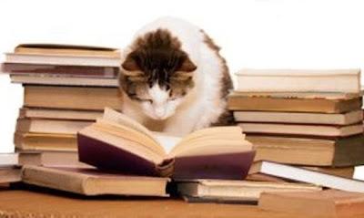 cat working hard