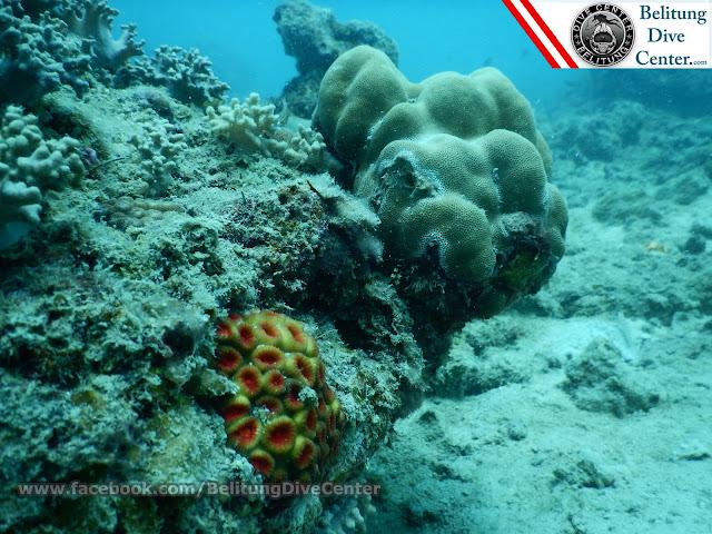 Karang Pulau Lengkuas