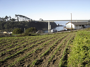 noyo hill farm