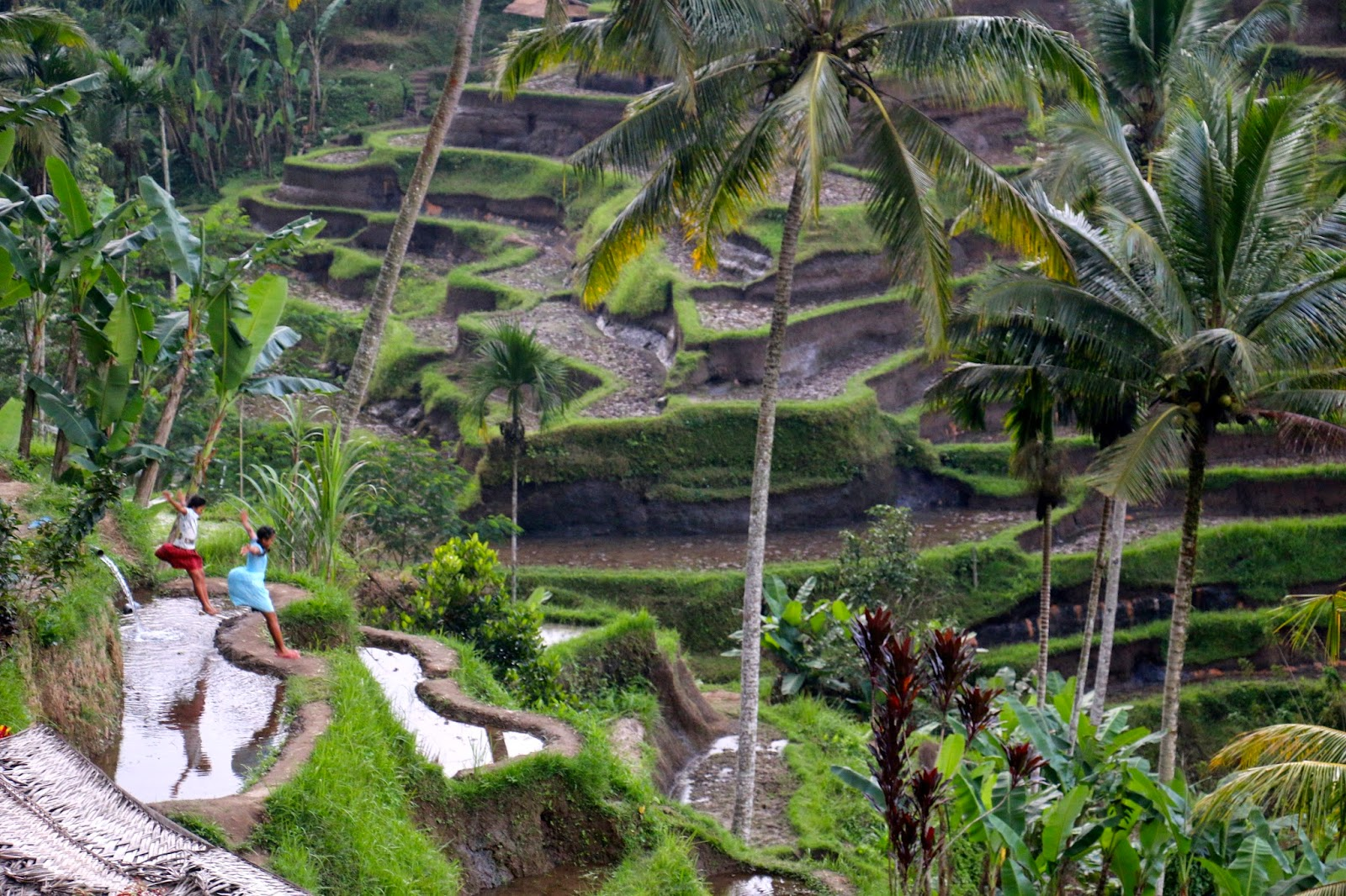 Oh my jdo for Tegalalang rice terrace ubud