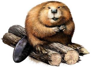 Il castoro si morde i testicoli (Fedro)