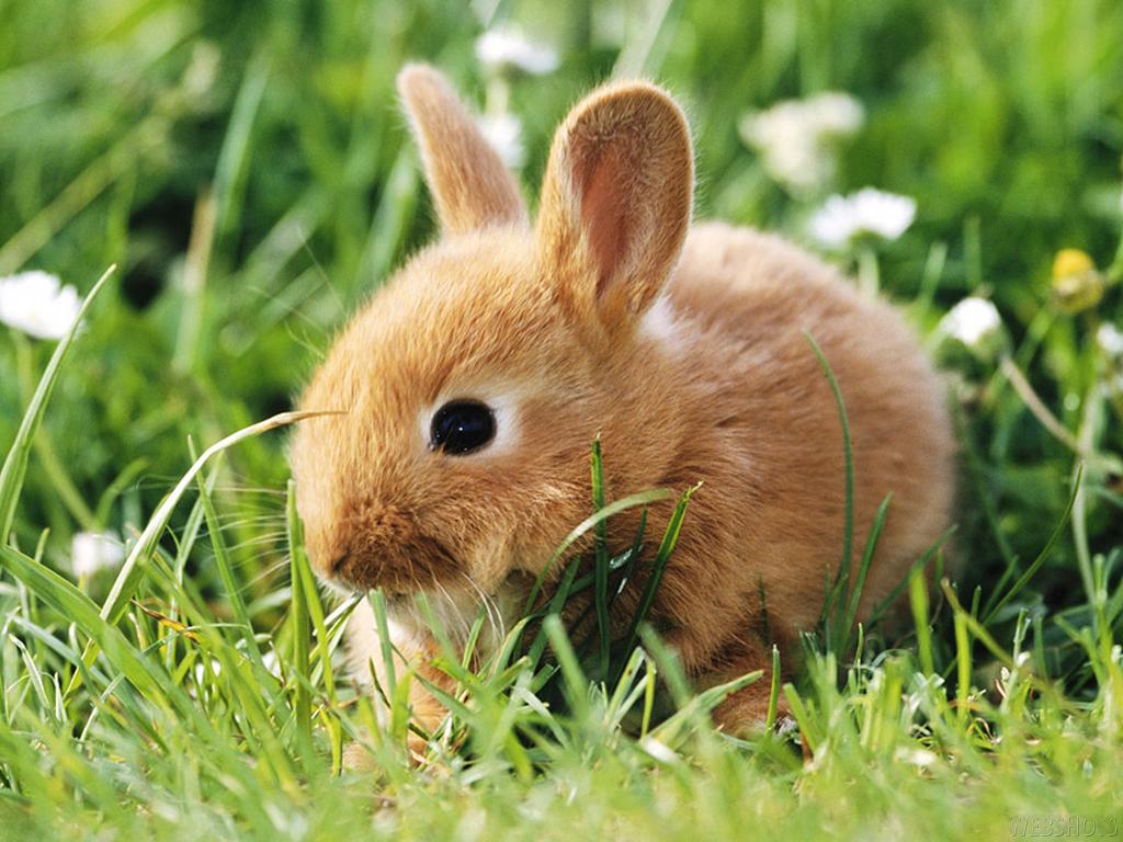 baby rabbit wallpaper cute - photo #10