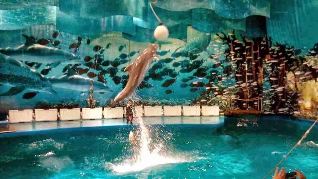 fotos de animales del zoo - Foto Noticias: Las fotografías de los animales hecho en los