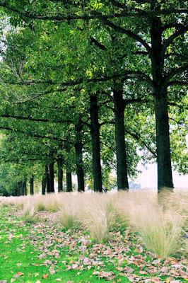 Paisaje romántico e inolvidable para un día de campo con tu familia (Disfruta el aire puro en contacto con la naturaleza)