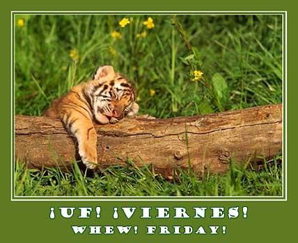 tiger cub sleeping on a log