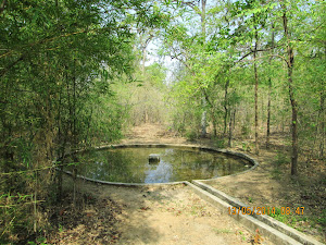 "Artificial ""Water-hole"" in Buffer zone."