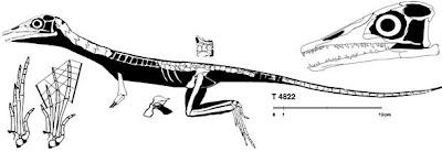 anatomia de Macrocnemus