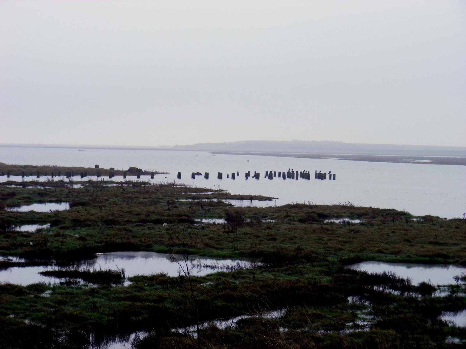 Two Tree Island Was Reclaimed