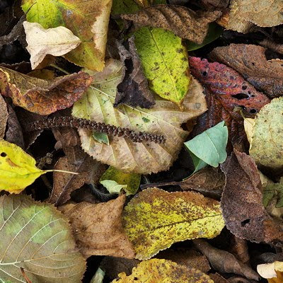 Closeup image of autumn leaves on the forest ground