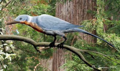 aves del cretaceo Shanweinao
