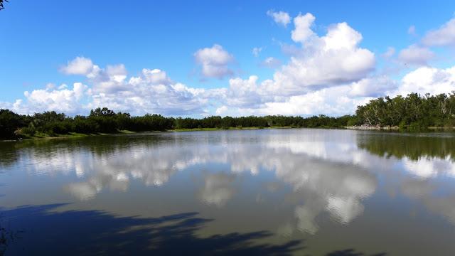 Eco Pond Everglades