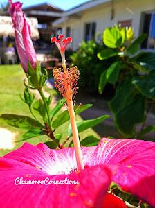 Flores, Gef Pa'go