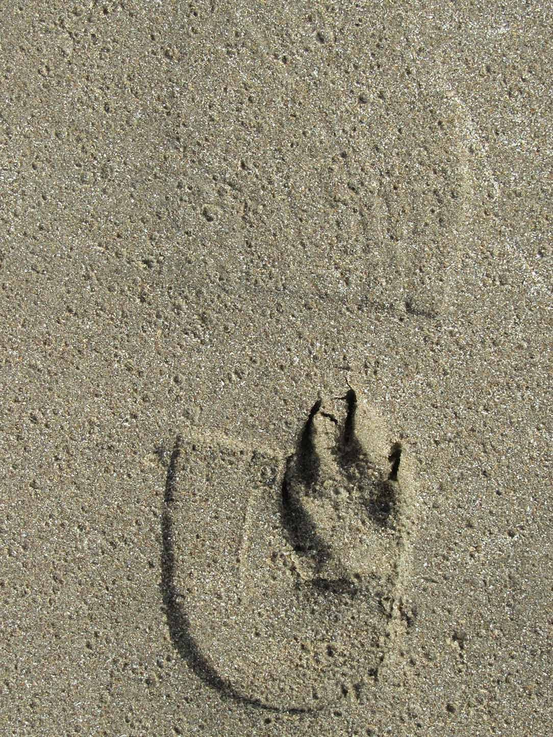 man's and dog's footsteps