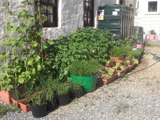 Huertos urbanos bah a de c diz y por qu no huertos en macetas - Container vegetable gardening plans ...
