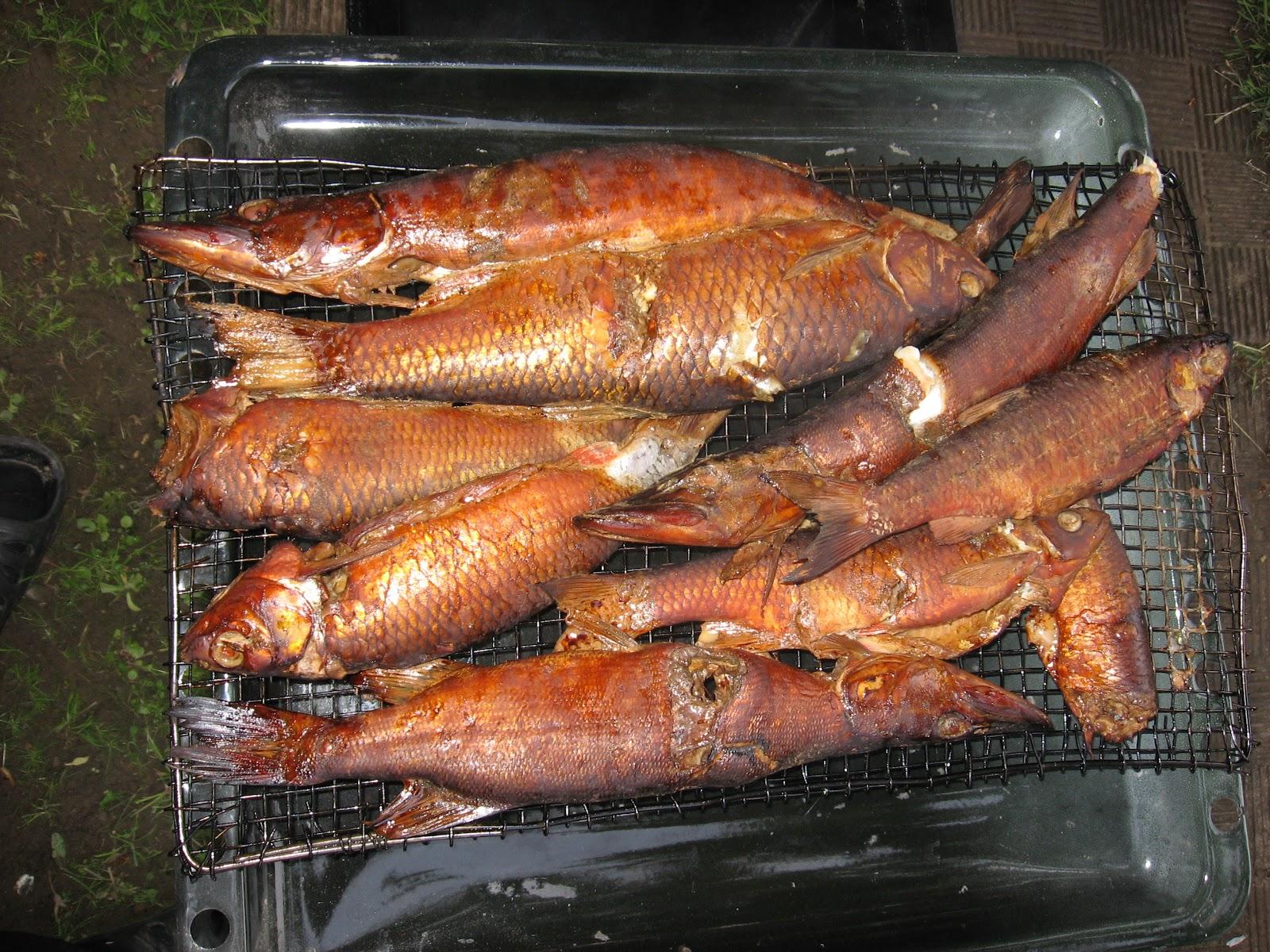 Рыба горячего копчения в духовке : рецепты в домашних условиях 72
