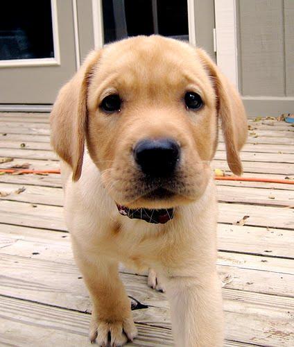 my dog list   ll mio cane lista  minha lista de c u00e3o