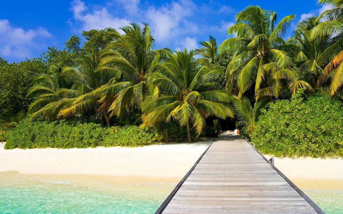Amazing Palms Widescreen HD Wallpaper