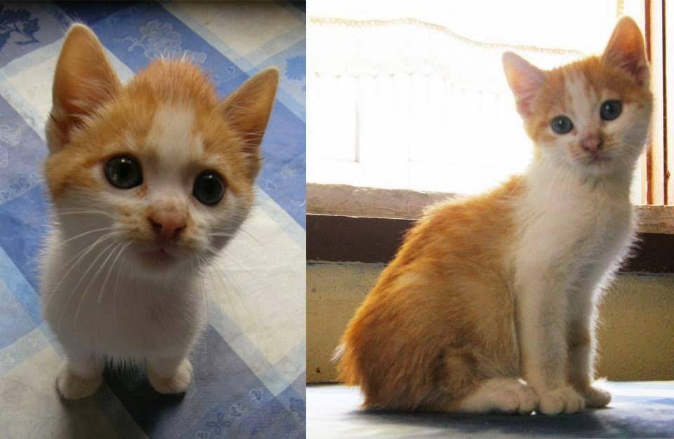 Quatro patas e focinhos tareco gato com 3 meses lindo - Cuidados gato 1 mes ...