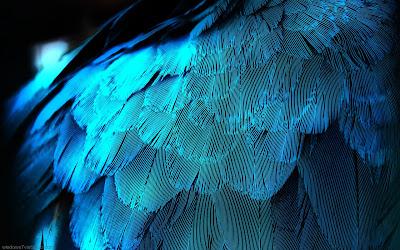 HD Bird wings Desktop wallpaper