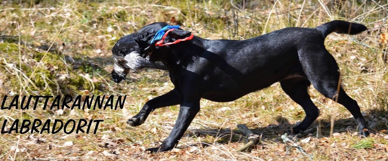 Lauttarannan Labradorit