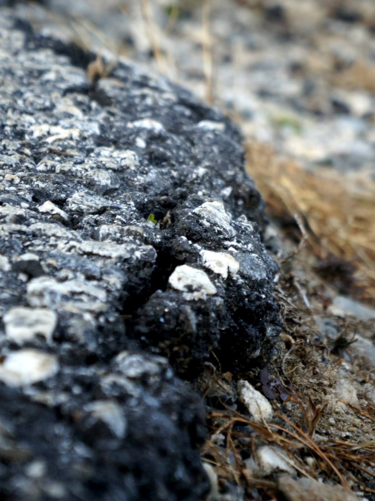 edge of an asphalt road