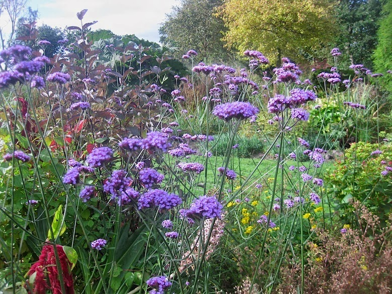 Roger brook the no dig gardener gardening transformed for Herbaceous border design examples