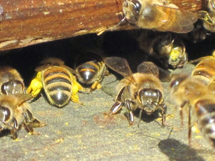 Top Bar Hive An Alternative Beekeeping