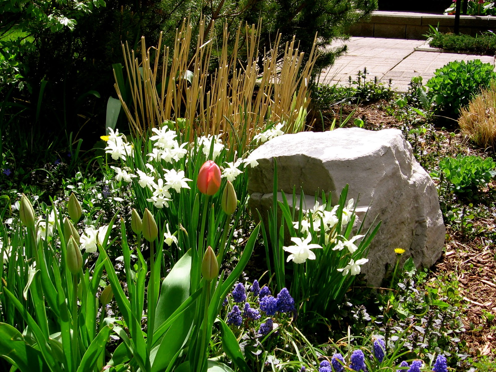 1000 images about st francis on pinterest shade garden for Spring bulb garden designs