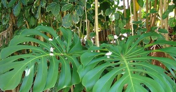 Arte y jardiner a dise o de jardines plantas ex ticas for Jardineria y plantas