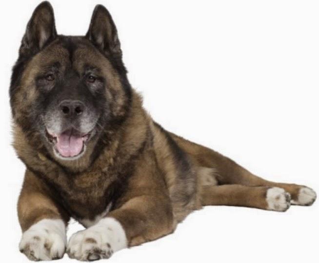 Behavior Changes in your Senior Dog