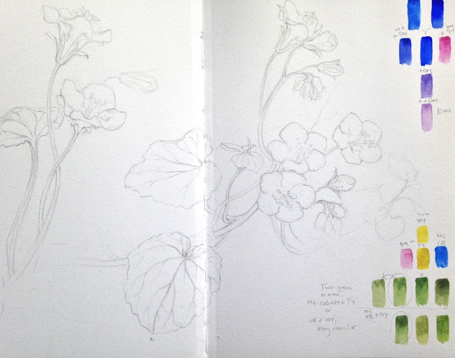 Sketchbook drawing of Phacelia campanularia and the basic blue hues