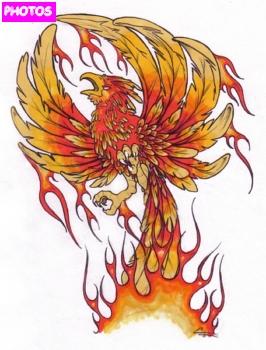 Phoenix bird tattoo phoenix tattoo phoenix tattoo 21 phoenix tattoo 22 voltagebd Choice Image
