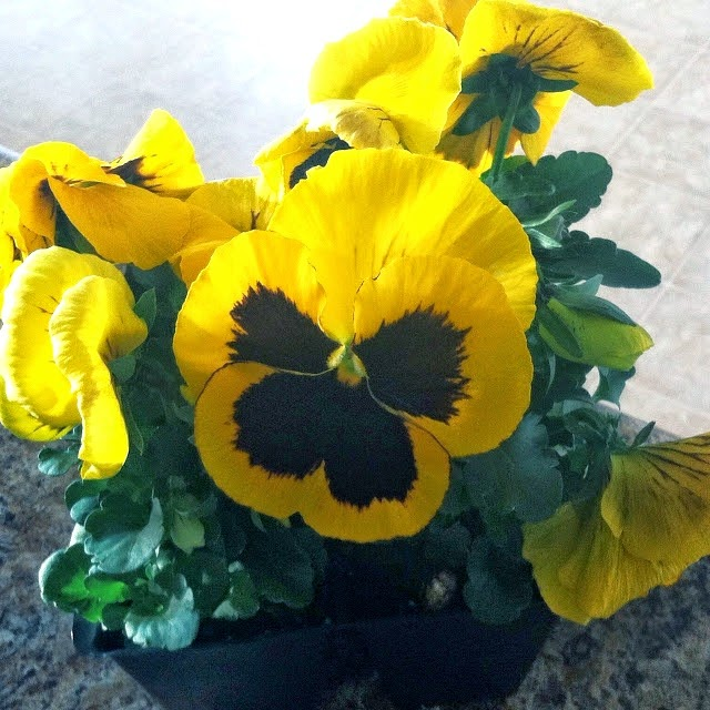 ROSYRILLI.COM A pocket full of pansies