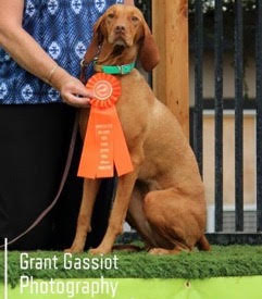 DN (Dock Novice) title at Fidolettes Sept 2015
