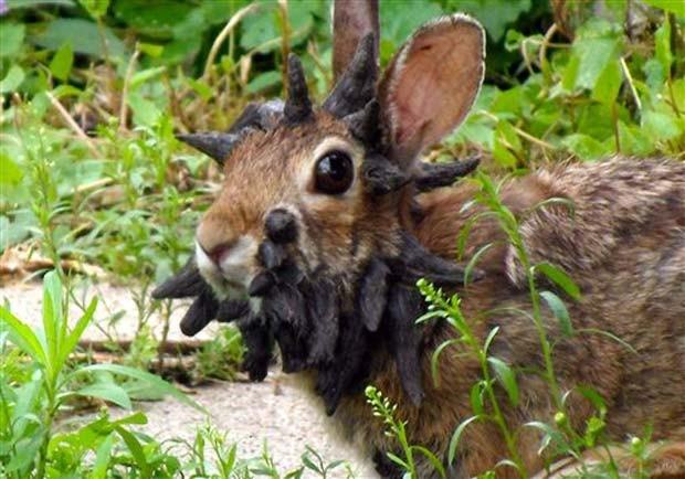 O coelho de Frankenstein - www.deubandeira.com.br