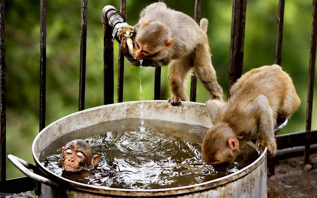 http://hdhut.blogspot.com/2014/02/top-16-most-cute-and-beautiful-monkey.html
