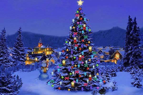 outdoor christmas lights decorating ideas - How To Decorate Large Outdoor Trees For Christmas