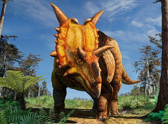 Xenoceratops foremostensis