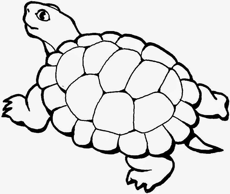printable turtle coloring pages - rules of the jungle turtle pictures to print and color