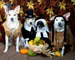 Animals In Thanksgiving Costumes