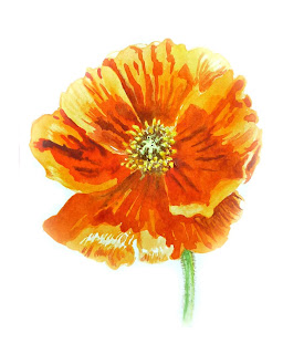 open floral