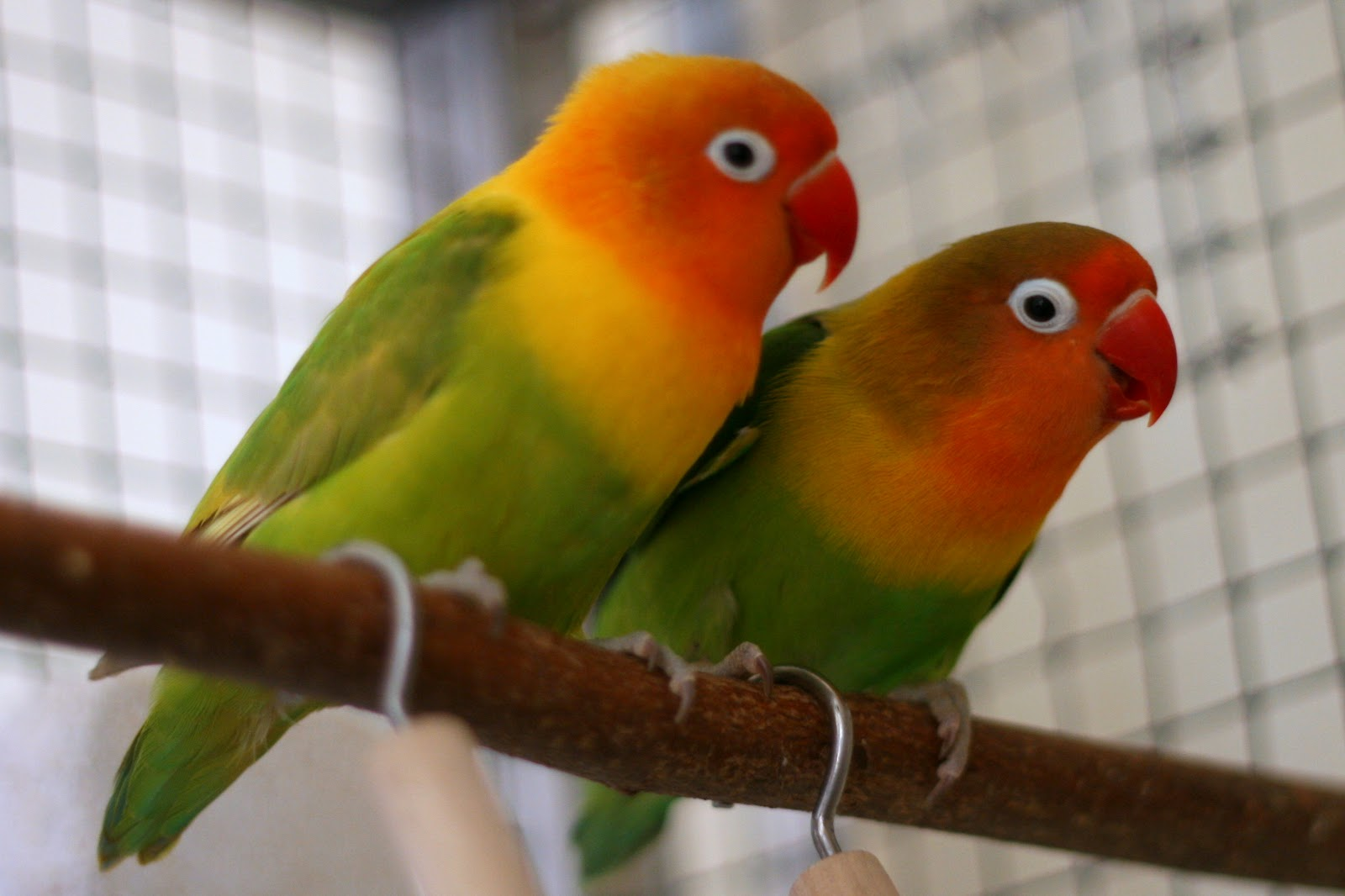 http://3.bp.blogspot.com/-lp9q3C7hzjg/UQfrhwQ286I/AAAAAAAAHg8/220G9tTOmKw/s1600/love-birds-wallpapers%2004.jpg