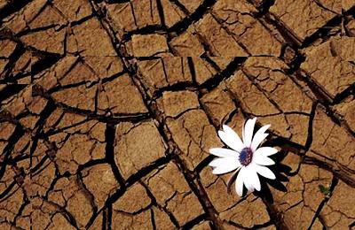 Filosofia Cotidiana Nova Acrópole Uma Flor No Deserto