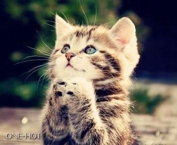 Aduh Tuhan, aku seneng banget, majikanku kasih kawan yang ganteng banget... buat nemani aku!!