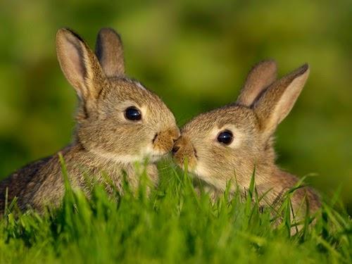 fotos animais adoráveis fofos se beijando beijo romântico