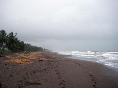 Playas Tortuguero, Limón