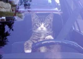 Kucing Tertinggal Di Dalam Kereta!