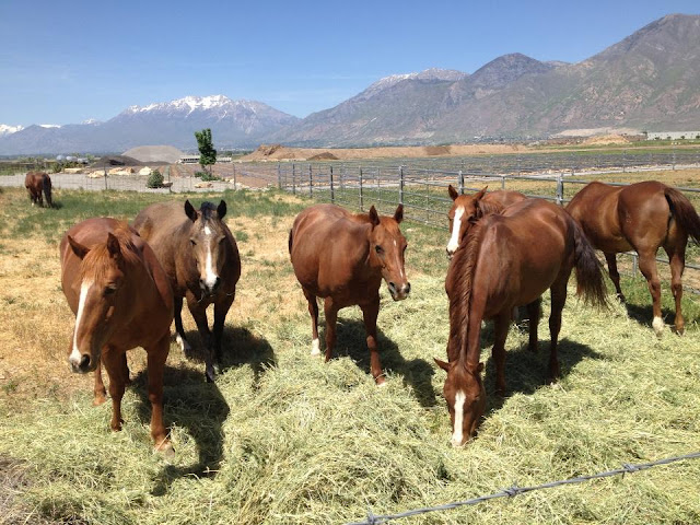 - The Utah Trotter Starving Horses Auctioned Kill Buyers Present for Mexico Slaughter