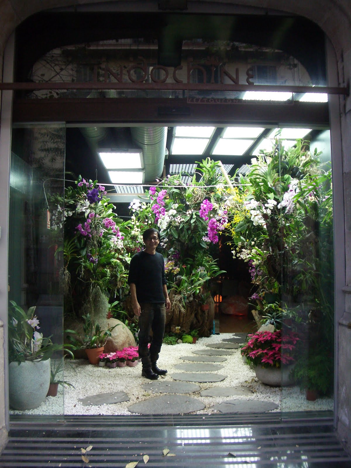 Todo orquideas all orchids cultivo in vitro showroom de for Jardin indochine