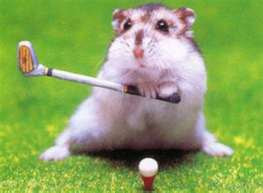 The Great Golf Player